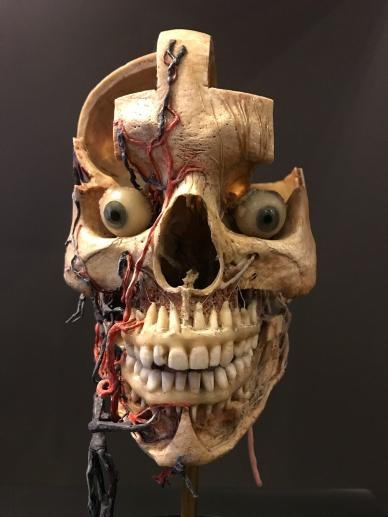human-face_34926513614_o