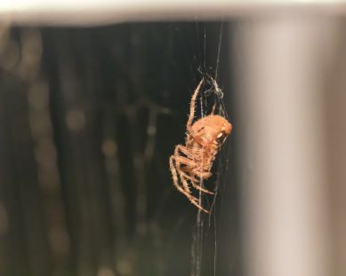 spider_27aug15-10_20929960262_o