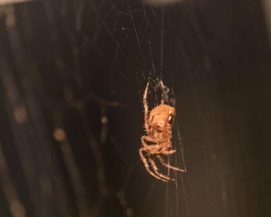 spider_27aug15-11_20929955942_o