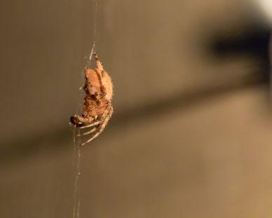 spider_27aug15-3_20751691280_o