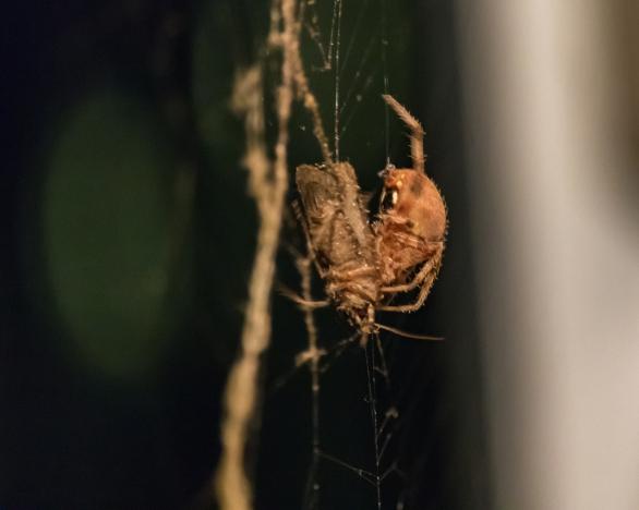 spider_27aug15-4_20939748055_o
