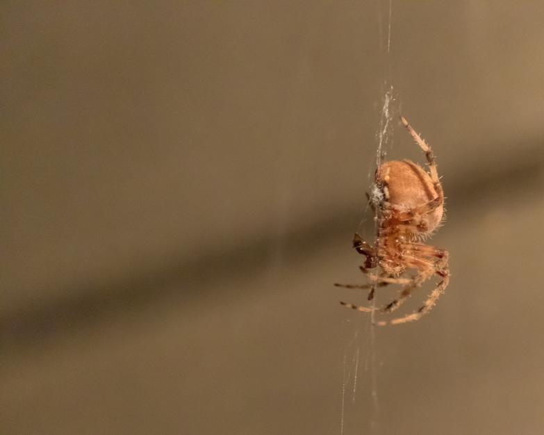 spider_27aug15-6_20317131814_o