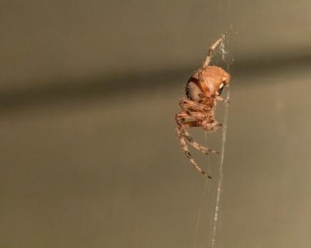 spider_27aug15-8_20317125334_o