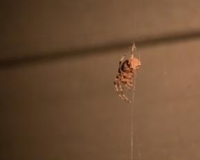 spider_27aug15-9_20318689223_o