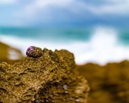 Snail on the rocks